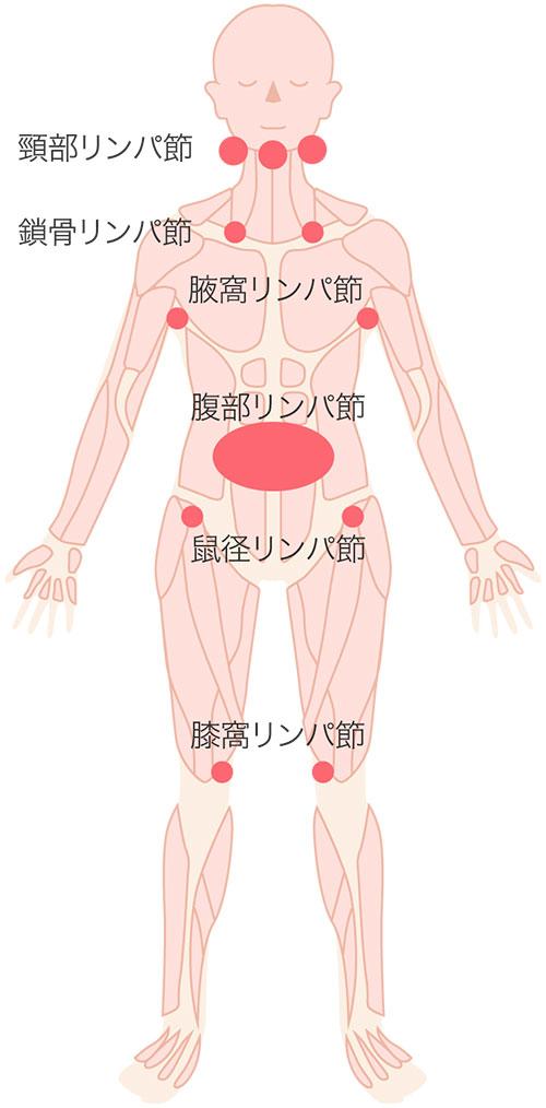 体内のリンパ節